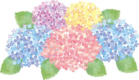 紫陽花:花 6月 梅雨 紫陽花 あじさい 和風 背景 ワンポイント