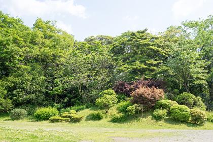 公園の芝生と樹木と空