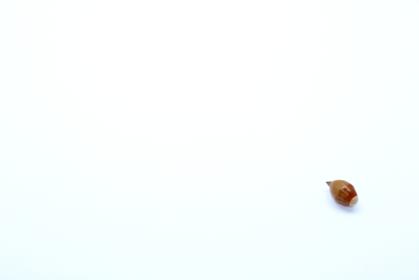 1つの可愛いドングリ