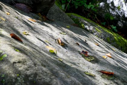 巨石に落ちた落葉と木漏れ日