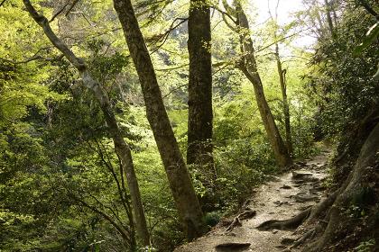 高尾山の緑あふれるハイキングコース(登山路)