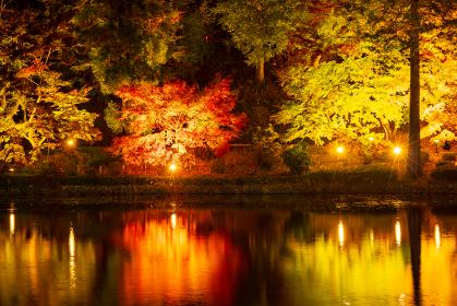 紅葉のライトアップ 東京 薬師池の紅葉