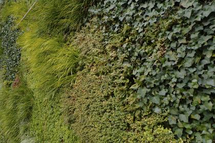 壁一面の植物