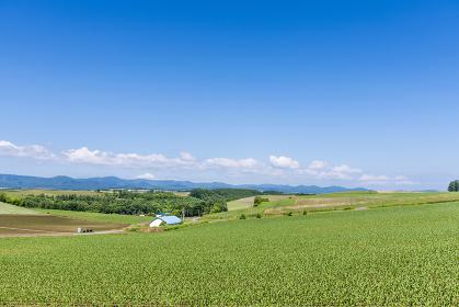 北海道 美瑛町 新栄の丘