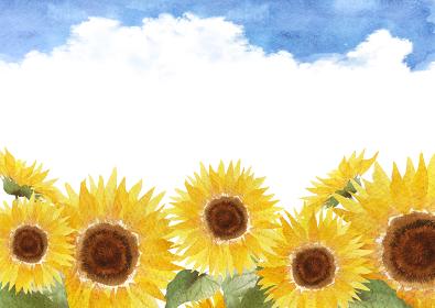 ひまわり 入道雲 背景 水彩 イラスト