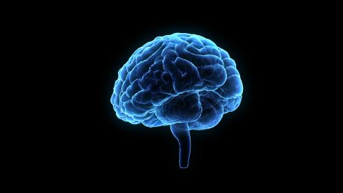 脳 頭脳 ブレイン 頭 あたま ヘッド 医療 科学 3Dイラスト CG 背景
