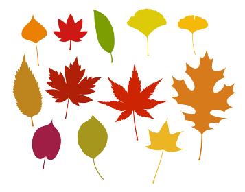 秋の紅葉イラストセット