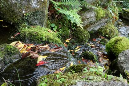 落ち葉の流れる小川 2