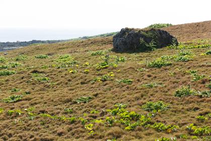 浜辺の植物・日本最南端、沖縄県波照間島