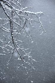 東京都心樹木雪景色