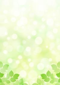 【キラキラ背景画像素材】新緑と木漏れ日の背景 縦位置 下