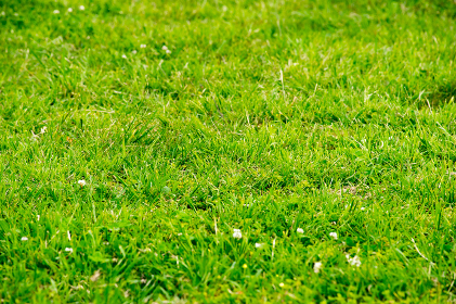 芝生・野原の素材