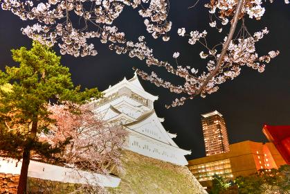 夜桜と小倉城【福岡県北九州市】