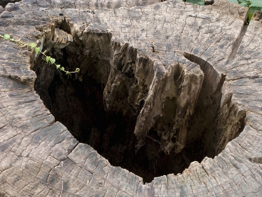 中が腐った木の幹