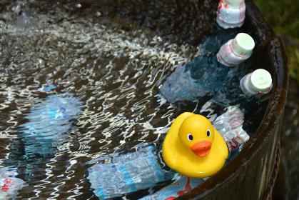 桶に水を張って冷やすラムネとアヒルちゃん