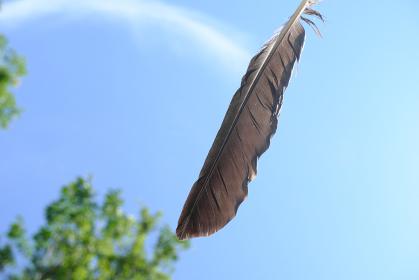 宙を舞うカラスの羽のイメージ