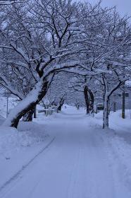 積雪した道