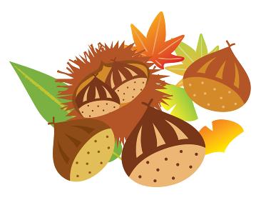 イガに入った栗と紅葉やイチョウや秋の葉っぱ