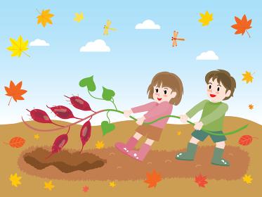 秋に芋掘りをする子供たち