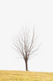 枯れた一本の木