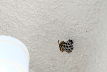 屋根裏にこっそり作る蜂の巣