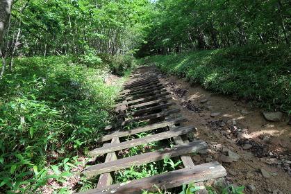 木道の階段を駆け上る!