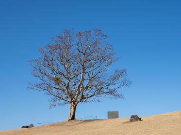 早春の青空と吾妻山公園の風景 1月