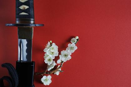 赤い背景に少し抜いた日本刀と白い花が咲いた梅の枝