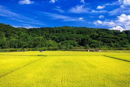 青森県・弘前市 夏の田園風景