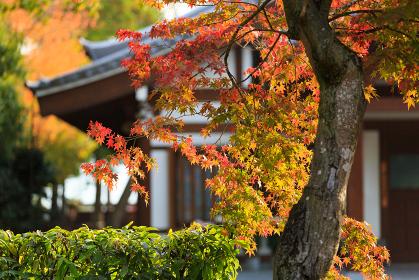 唐招提寺 (奈良県奈良市 2014/11/16撮影)