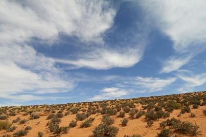 砂漠地帯の草木