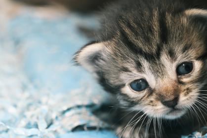 トラ柄の可愛いネコの顔アップ