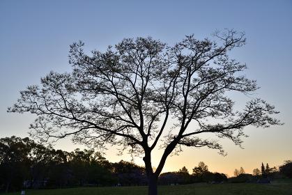 日の出の風景