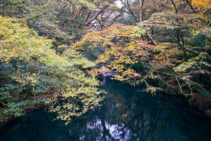 秋の爽やかな菊池渓谷