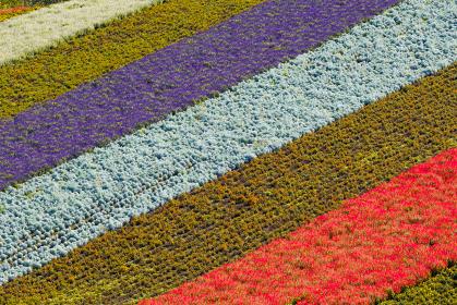 北海道の名所 四季彩の丘の花畑