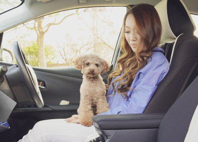 ペットとドライブのイメージカット