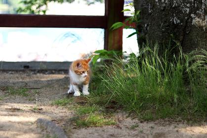 草むらを見る子猫
