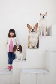 柴犬とパピヨンとコーギーと女の子