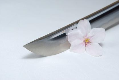 居合練習刀の切っ先と桜の花びら