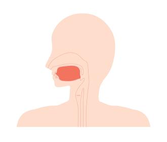 正しい舌の位置のイラスト