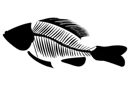 魚の骨イメージ