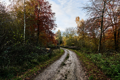 Autumn Colours, Curved Path Through Forest, Vibrant Tree Colours