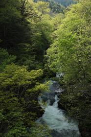 定山渓・小樽内川