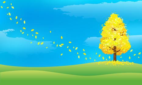 イチョウと秋の青空