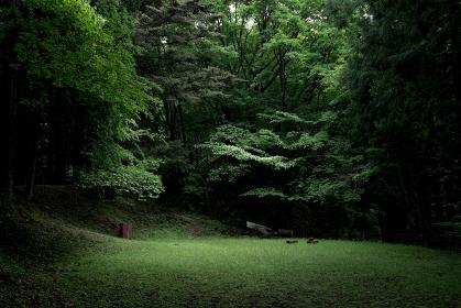 森の中 光が差し込んだ広場