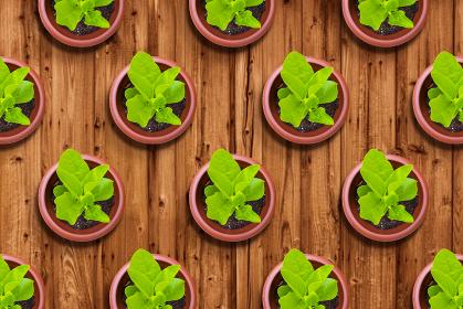 植物のパターン アブストラクト 木目 5454