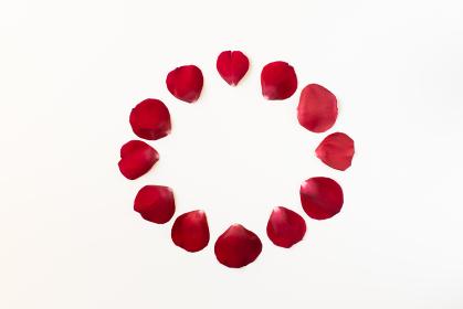 白背景で、赤いバラの花びら、サークル