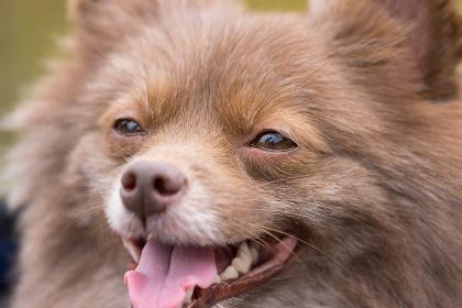 可愛い小型犬の表情