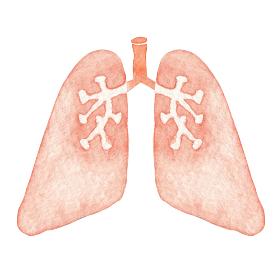 肺 人体 臓器 内臓 水彩 イラスト