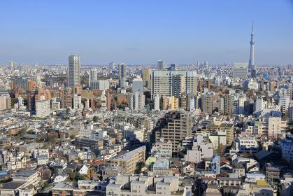 スカイツリーと東京都心のパノラマ